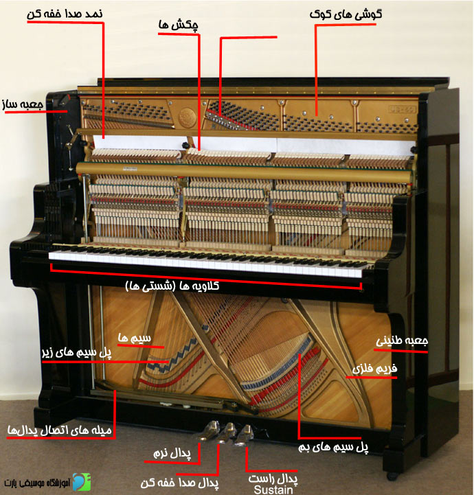 piano anatomy